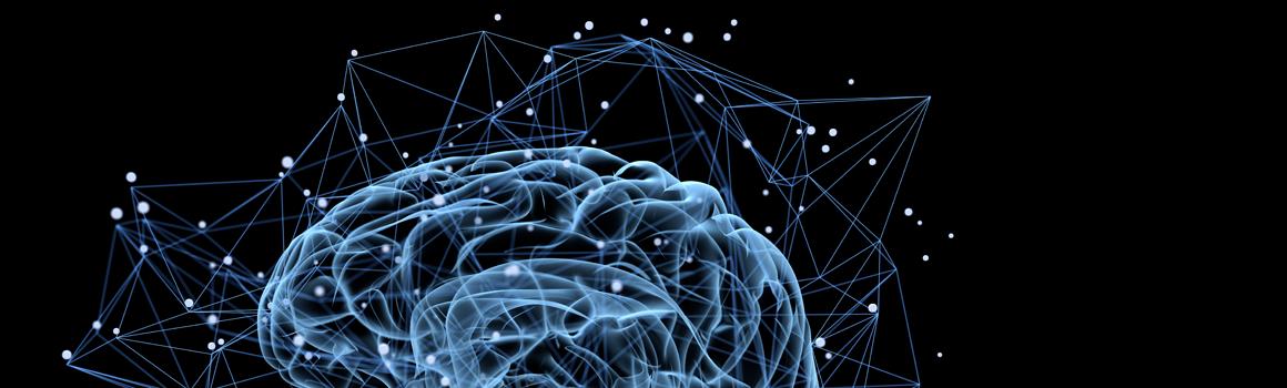 C.G.I. of the Brain